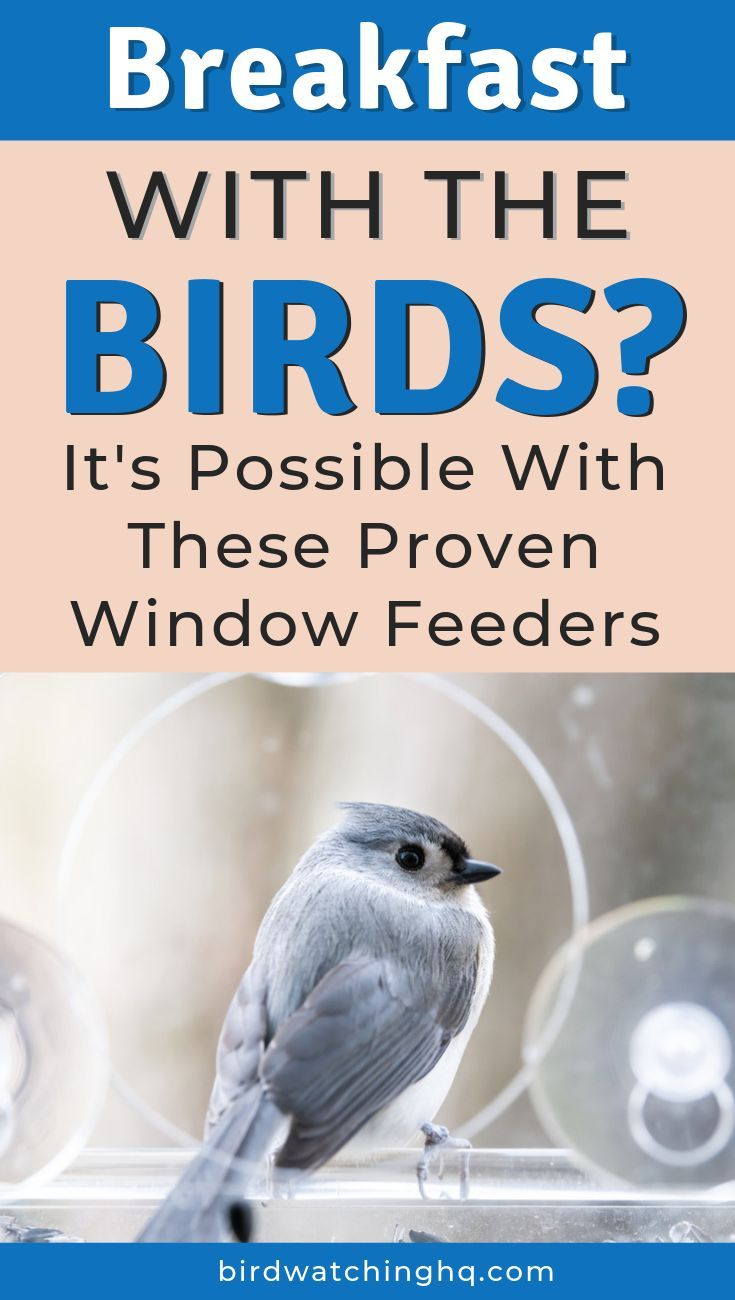 How To Get Rid Of Birds Outside My Window