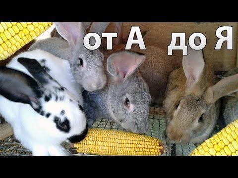 Рацион и корм для кроликов, комбикорм, кормление кроликов зимой. - YouTube