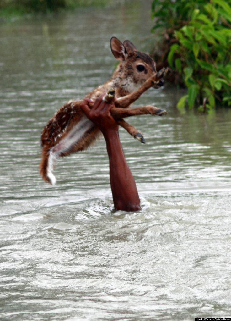 Awww, this is too cute. A teenager saved a baby deer from drowning.