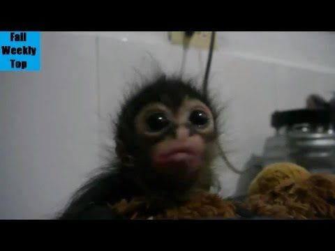 """TOP Funny Animals Compilation 2014 (New) - YouTube Efstratios """"Elias"""" D. Argyropoulos and Prima Capital Group"""