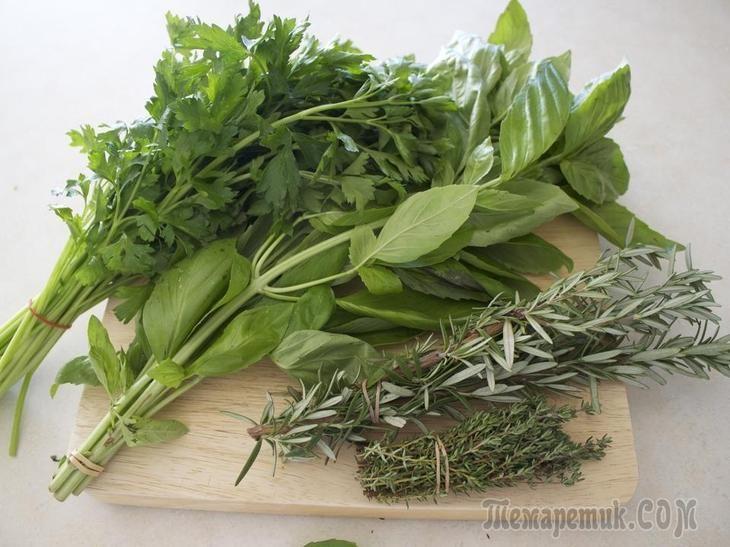 Как вырастить на даче пряные и лекарственные травы