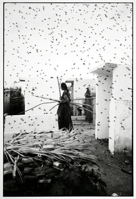 """Graciela Iturbide ::  The Cemetery, Juchitan, Mexico, 1988 [in her website, part of the series Birds] more [+] by this photographer """"This image is part of Graciela Iturbide's series on the Juchitan..."""