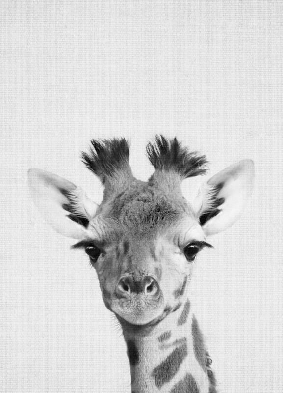 Giraffe Monochrome Photograph Poster In 2020 Foto Poster Juniqe Giraffen