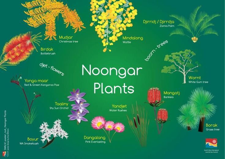 Noongar language poster. Courtesy SWALSC