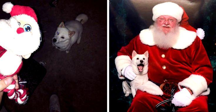 Eesta lista tiene de todo: perros, gatos, erizos, lagartijas y hasta un caballo. Todos tienen algo en común: no pueden esperar para que llegue la Navidad.