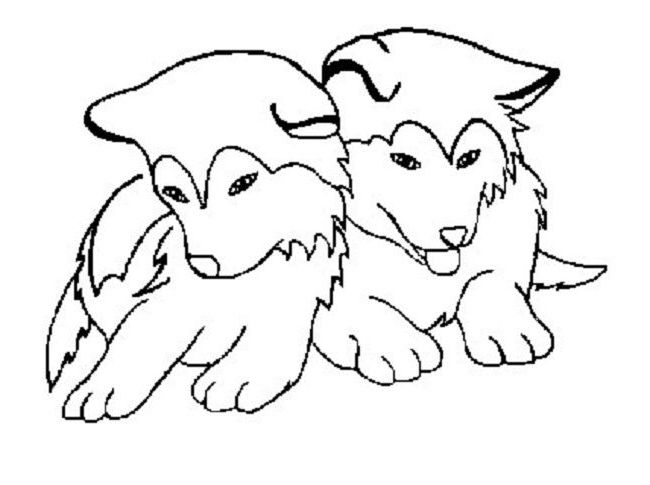 Cute Baby Husky Pages Coloring Pages