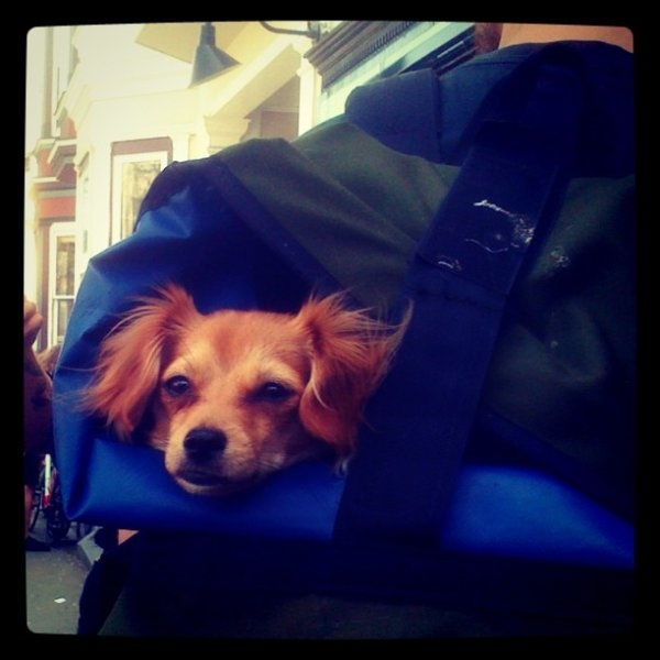 This spring's hottest accessory! 'The little dog that laughed.' http://t.co/DjeGF291 #PickDeck