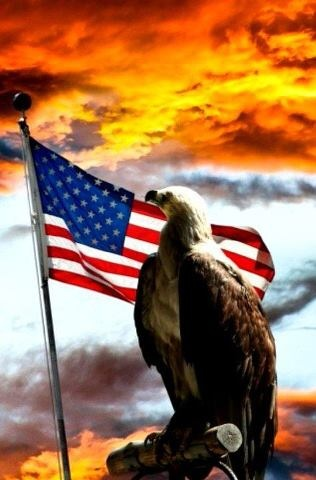 145 best American Eagle Flags images on Pinterest  American pride