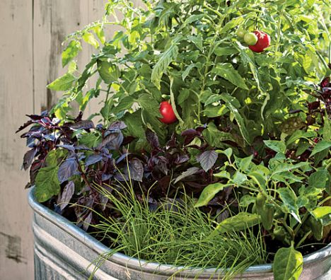 Think you gotta have a farm or even a large yard to grow enough fresh fruit, vegetables and herbs to feed your family all summer? You'd be surprised how mu