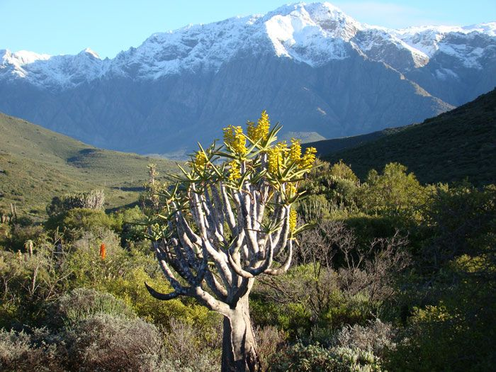 The Karoo Desert © South African National Biodiversity Institute (SANBI), partner of the Botanical Society of South Africa