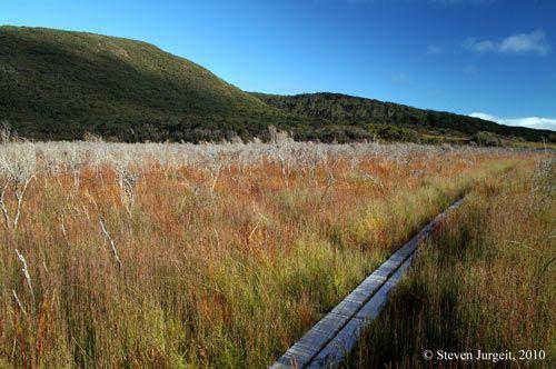Tasmania South Cape Bay track.jpg 500×332 pixels