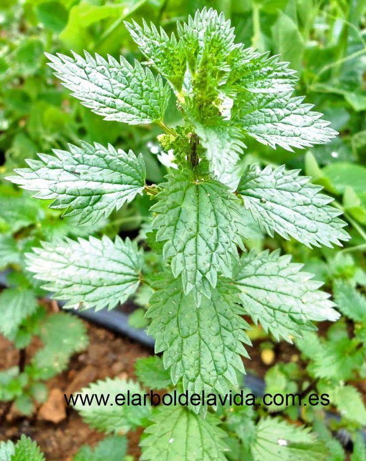¿Padeces de alergia? ¿Quieres saber qué plantas pueden ayudarte considerablemente?