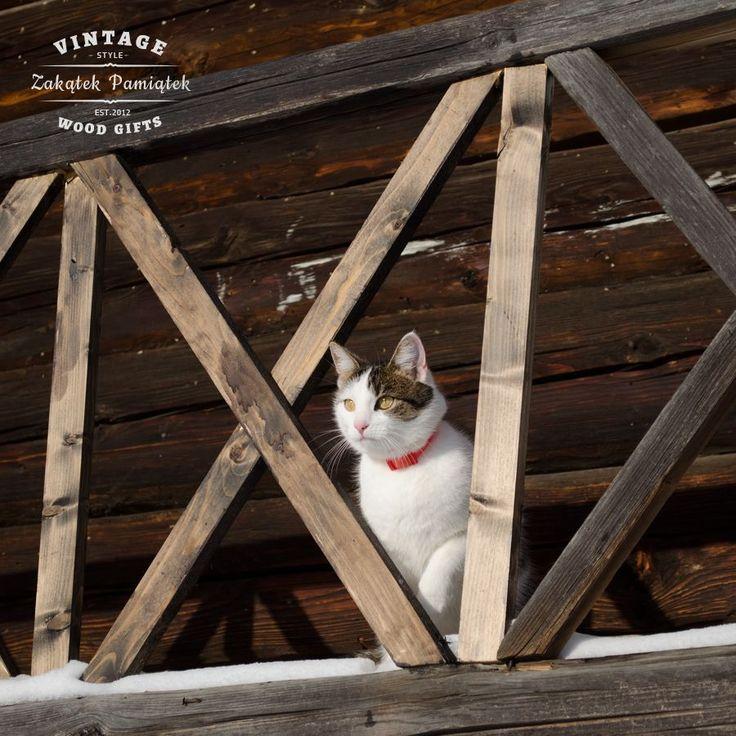 Zima na wsi bywa trudna dla kotów