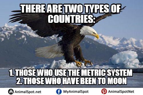 Bald Eagle Meme