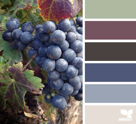 vineyard hues - design seeds