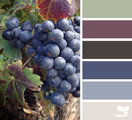 vineyard hues