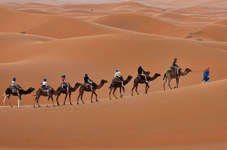 #MoroccoCamelTrekking takes you straight into the Moroccan Sahara region where you will find the best travel experience that takes you off the beaten track. Know more @ http://www.camelsafari.net/