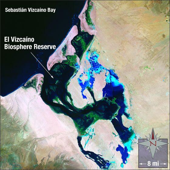 Landsat Image Gallery - El Vizcaíno Biosphere Reserve