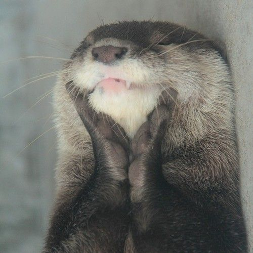 Nothing beats a happy otter.