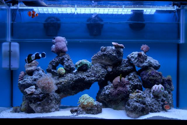 22 best images about my salt water aquarium on pinterest for 20 gallon saltwater fish tank