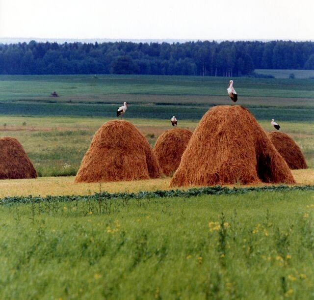 Latvia - country side