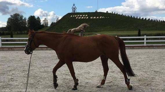 Horse-riding in Alytus | #MyWorldOfActivities