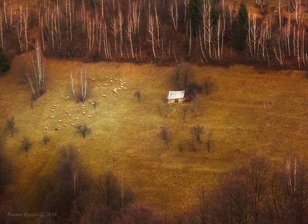 Walk in circles Photo by Hamos Gyozo -- National Geographic Your Shot