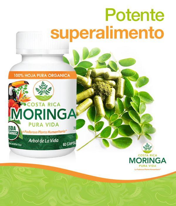 La moringa es considerada un superalimento pues contiene 92 nutrientes, 46 antioxidantes, ácidos omega, aminoácidos esenciales y múltiples vitaminas. Por ello, es una socorrida herramienta en el combate de la desnutrición. #Moringa #PuraVida #Organico #Natural