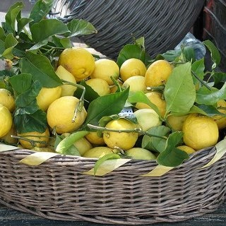 Thanks for the great board today and happy Friday!  Tonight and Saturday, let's do LEMONS & LEMON GROVES.