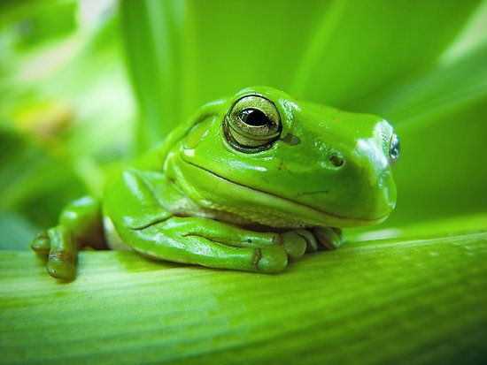 We had a family of tiny green frogs living under our verandah pot plants once and my youngest named one Karludu  this reminds me of that.