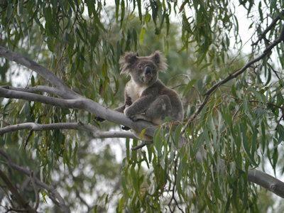 One of our National treasures on North Stradbroke Island, Queensland, Australia  | TripTide