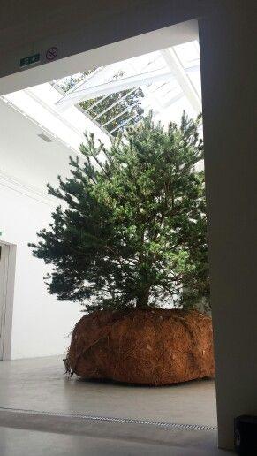 Moving tree biennale