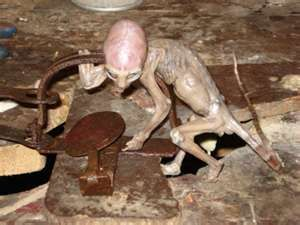 In May of 2007, a small animal was caught in a rat trap in Mexico. The farmer that caught it, drowned it out of fear. Researchers have done numerous tests on the creature. It was first thought to be a skinned monkey but the tests proved not only did it have skin but the skin was close to human and reptilian combined. The creature has a large brain cavity which suggests intelligence. The researchers also could not find a DNA match of the creature and have no idea what it is or where it came…