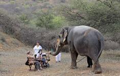elephant camp near jaipur