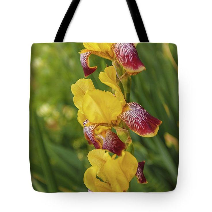 "New artwork for sale! - ""Beautiful irises "" - https://fineartamerica.com/…/beautiful-irises-anna-matveeva… … @fineartamerica"