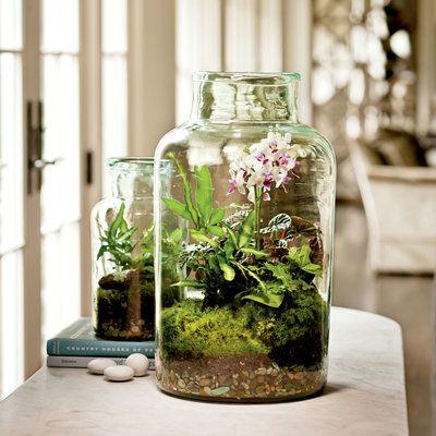 Indoor Container Gardening Ideas: Garden Under Glass