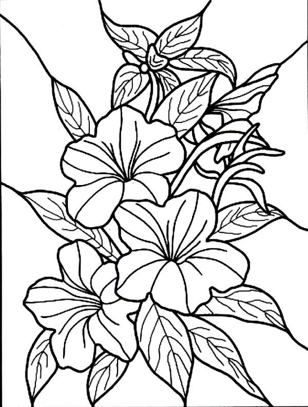 Hibiscus Coloring Pages Collection Flower Coloring Pages Flower
