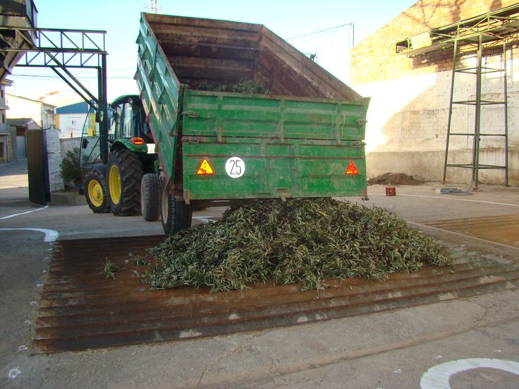 When it comes to the mill the olives are dumped in hoppers that are ready for harvesting fruit.   From here begins a series of processes: grinding, milling, battering, pressing, decantation
