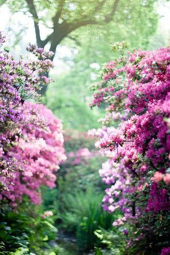 secret garden i-m-in-the-garden