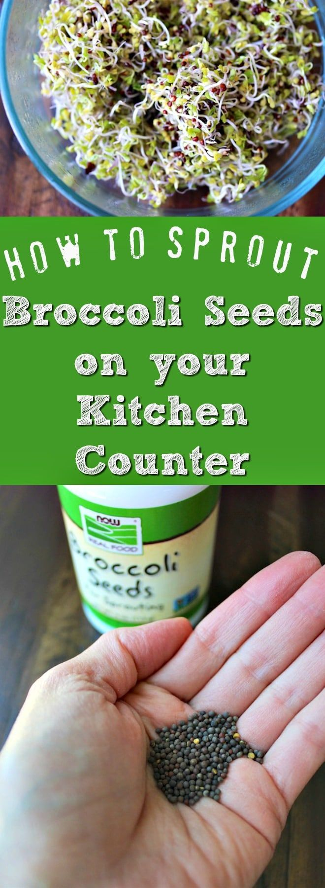 How to Grow Broccoli Sprouts in Your Kitchen. No green thumb required! via @cleaneatingkitchen