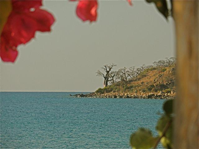 #Likoma Mango Drift #ViewFromtheBar #LakesideBar