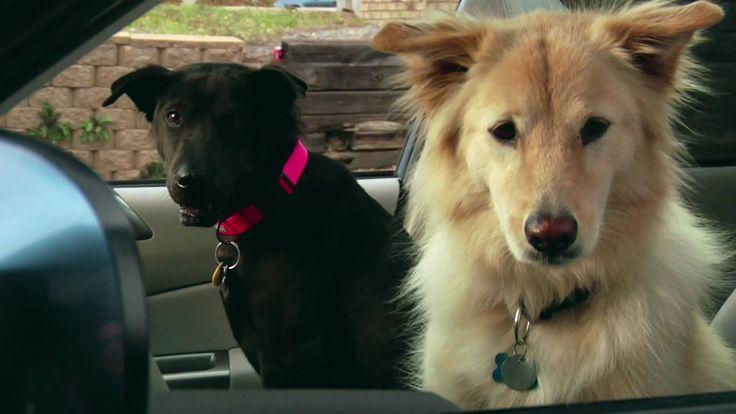 Subaru South Blvd >> 28 best images about Subaru Dog Commercials on Pinterest   Radios, Subaru forester and Subaru