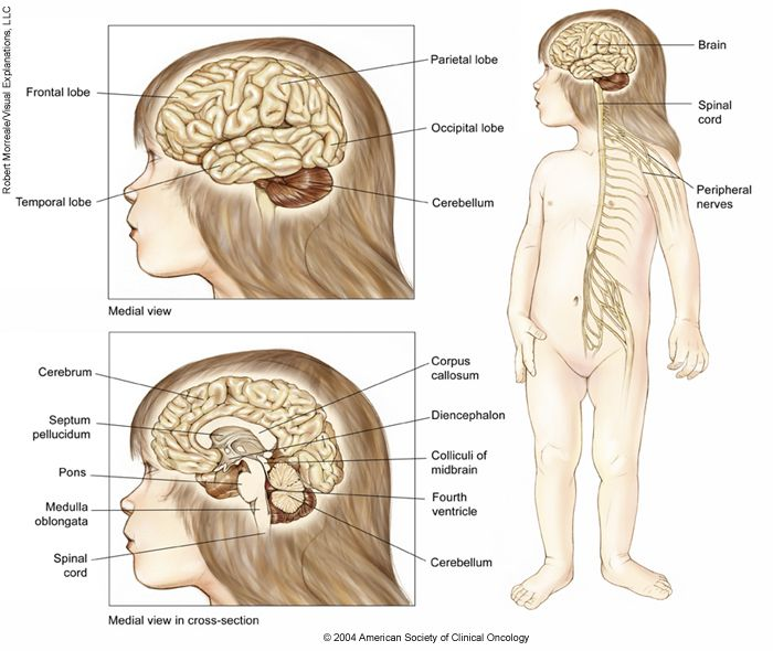 """term paper on brain cancer """"while the paper rightly suggests that more research is needed to determine why  there has been a rise in this type of malignant brain tumour,."""