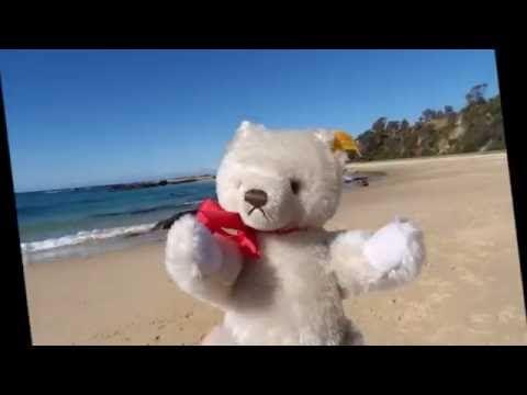 Bear Hugs Bear Tales - Ozwald Steiff Visits Bermagui #teddybears #NSW