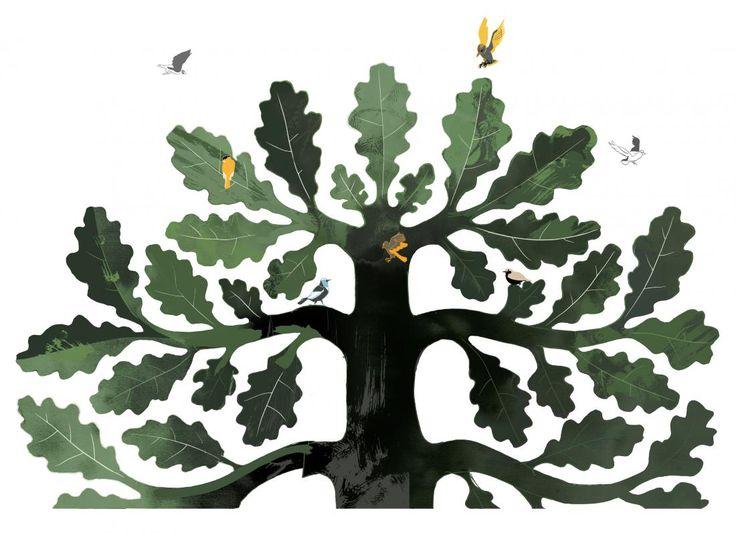 Suomen Kulttuurirahasto  Aluelliset rahastot TAMMIKUU Päähaku LOKAKUU