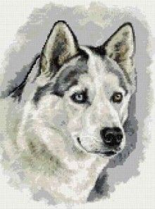 Husky cross stitch