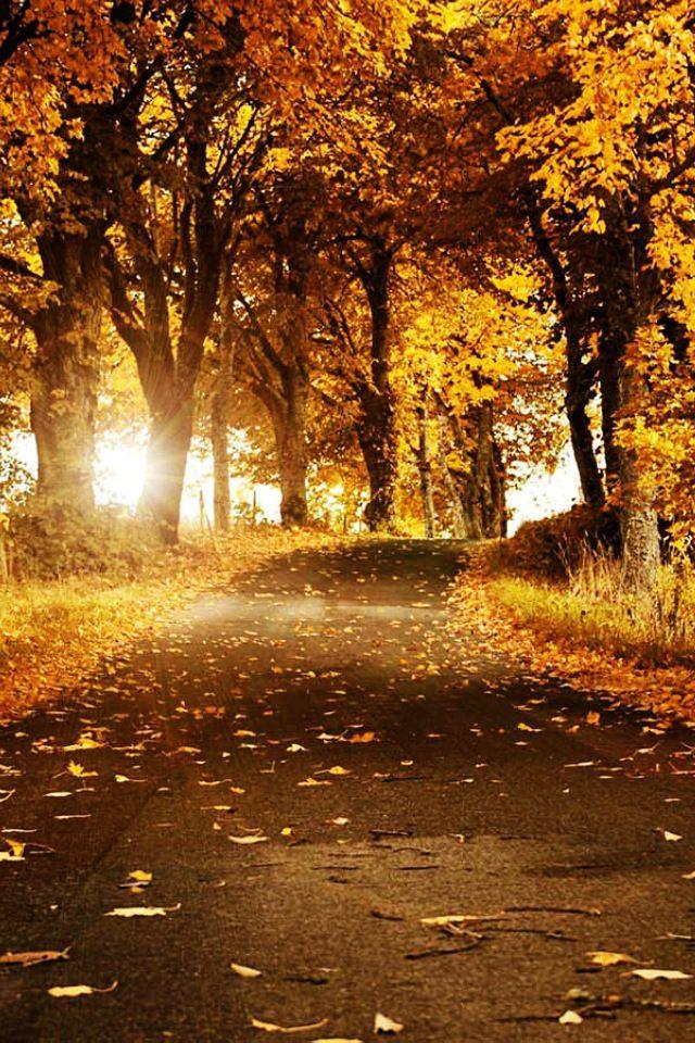 Winding road through falling leaves.