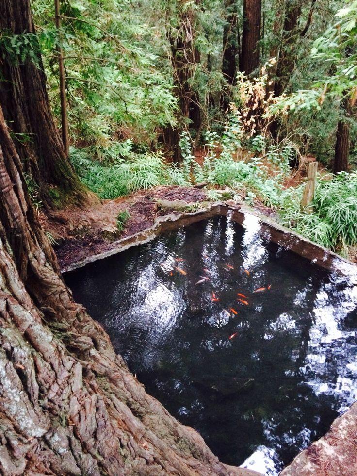 Koi pond uc santa cruz travels pinterest for Koi pool santa