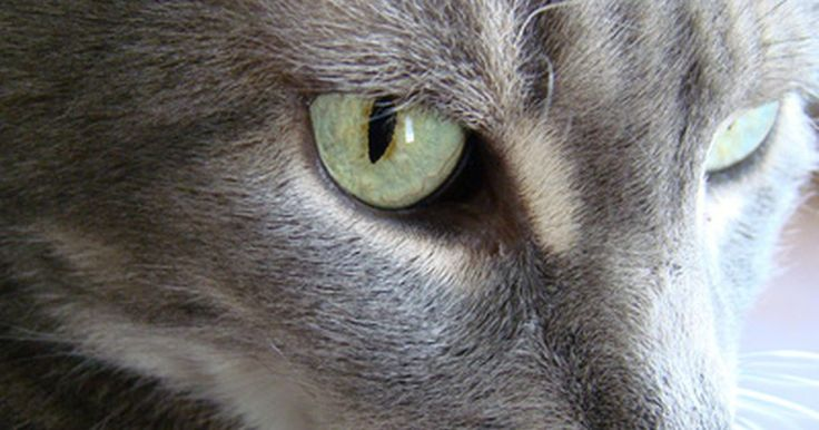 ¿Por qué los gatos se arrancan el pelo de a mechones?