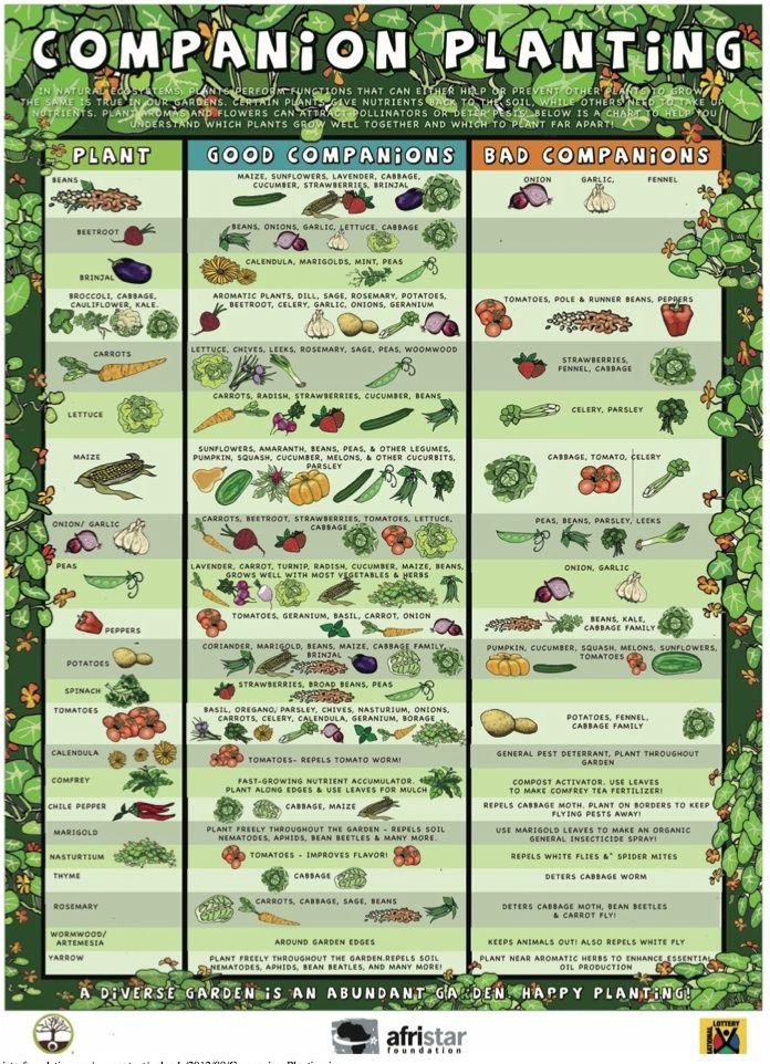 welke planten samen
